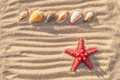 Starfish and sea shells with sand Royalty Free Stock Image