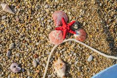 Starfish and sea shells, white rope, lie on multi-colored pebble. Multicolored seashells on a small pebble close up stock image