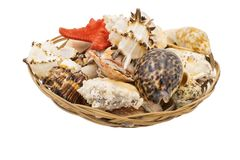 Starfish and sea shells in a wicker basket stock images