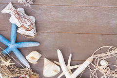 Starfish and sea shells on wooden board Stock Image