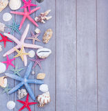 Starfish and sea shells on wooden board Stock Images