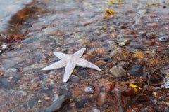 Starfish on  sea shore Stock Image