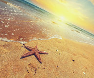 Starfish on a sea shore at sunset. Vintage stile. Travel concept. Royalty Free Stock Images