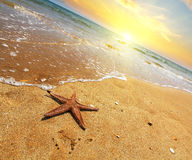 Starfish on a sea shore at sunset. Vintage stile. Travel concept. Stock Image