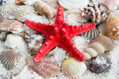 Starfish, sea slugs and sea shells Royalty Free Stock Photos