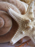 Starfish and Sea Snail Shell Royalty Free Stock Photography