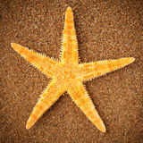 Starfish or sea star Royalty Free Stock Images