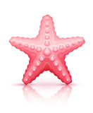 Starfish sea star Stock Photo
