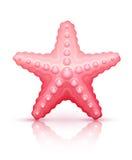 Starfish sea star Stock Photo