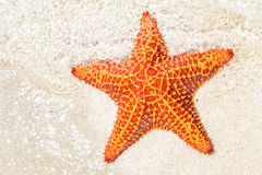 Starfish (sea star) near the shore of a tropical beach Stock Photos