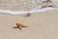 Starfish (sea star) on sandy beach Stock Photos