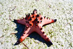 Starfish, sea, Thailand. Royalty Free Stock Photography