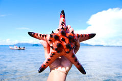 Starfish, sea, Thailand. Royalty Free Stock Photos