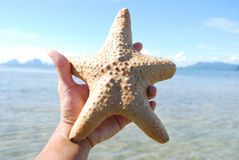 Starfish, sea, Thailand. Royalty Free Stock Photos