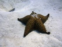 Starfish on the seabed royalty free stock photo