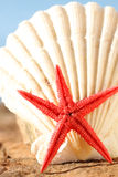 Starfish and seashell royalty free stock images