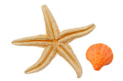 Starfish and Seashell royalty free stock photo