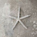 Starfish Seashell Royalty Free Stock Images