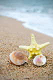 Starfish and seashell Stock Images