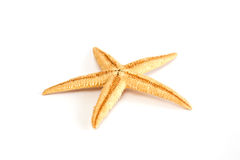 Starfish seashell Royalty Free Stock Photography