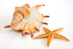 Starfish, seashell Fotos de Stock Royalty Free