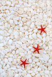 Starfish and Seashell Background Stock Images