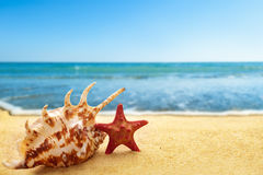 Starfish and seashell on beach Stock Photography