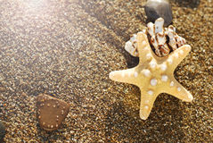 Starfish and seashell on the beach at sunrise. summer seasonal background Royalty Free Stock Images
