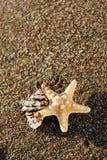 Starfish and seashell on the beach at sunrise. summer seasonal background Stock Images