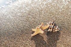 Starfish and seashell on the beach at sunrise. summer seasonal background Royalty Free Stock Photos