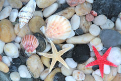 Starfish, seashell, and colorful pebble stones Stock Images