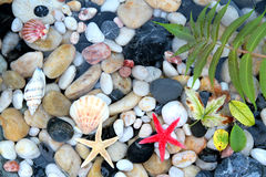 Starfish, seashell, and colorful pebble stones Stock Photos