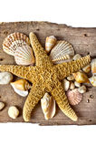 Starfish with seashell on log Stock Photos