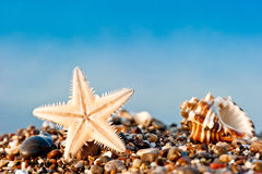 Starfish and Seashell on sand and pebble beach Royalty Free Stock Photography