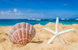 Starfish with seashell on the sandy beach Stock Photography