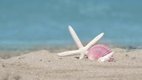 Starfish, seashell, scallop on sandy beach, turquoise waves of tropical island. Exotic paradise holiday relaxation touristic destination, UHD 4K stock video footage
