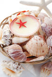 Starfish and seashell souvenirs. In a basket Royalty Free Stock Images
