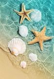 Starfish and seashell on the summer beach in sea water. Stock Images