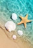 Starfish and seashell on the summer beach in sea water. Royalty Free Stock Photo