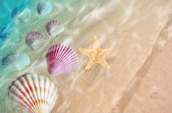 Starfish and seashell on the summer beach in sea water. Summer background. Summer time royalty free stock photos