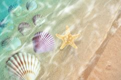 Starfish and seashell on the summer beach in sea water. Summer background. Summer time stock photo