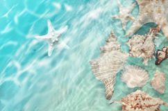 Starfish and seashell on the summer beach in sea water. Royalty Free Stock Images