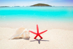 Starfish and seashell in tropical beach Royalty Free Stock Photo