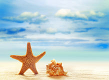 Starfish and seashell on white sand beach with ocean royalty free stock photo