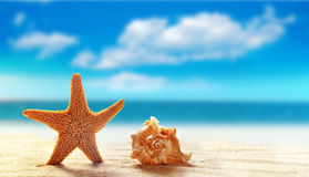 Starfish and seashell on white sand beach with ocean royalty free stock photography
