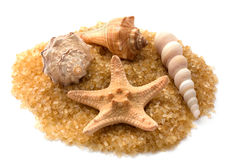 Starfish and seashells. On golden background Stock Photo