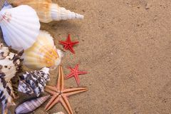 Starfish, seashells stock photography