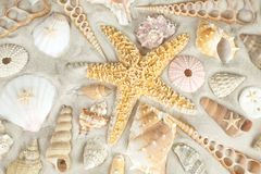 Starfish and seashells Stock Images