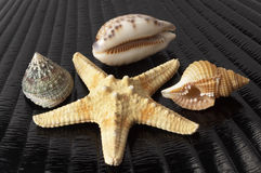 Starfish and seashells Royalty Free Stock Photo