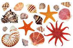 Starfish and seashells. A collection of interesting starfish and seashells isolated on a white background royalty free stock images